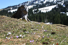 meadow during spring in oberjoch